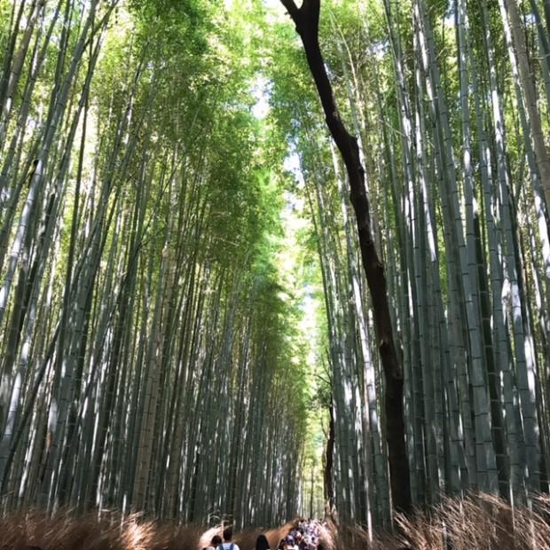 嵐山の竹林は とっても気持ちよかった~