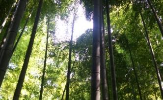 嵐山 の 竹林  風も気持ちよく 涼しかった~♪