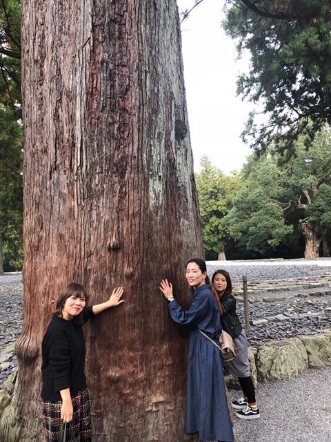 大木からもエネルギーを